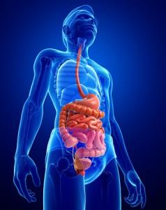 31141294 - illustration of male small intestine anatomy